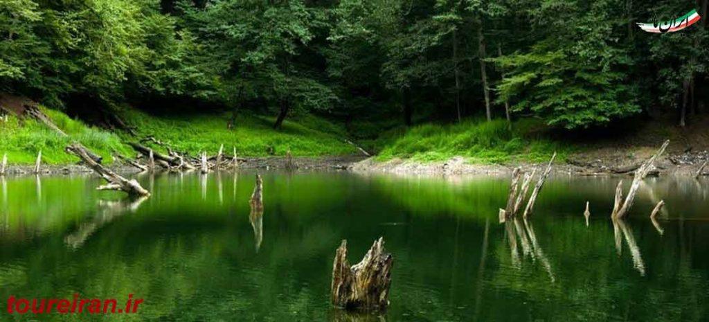 تنه های درخت سر برآورده از دل آب دریاچه چورت www.toureiran.ir